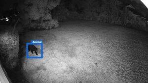 alarm.com at night bear